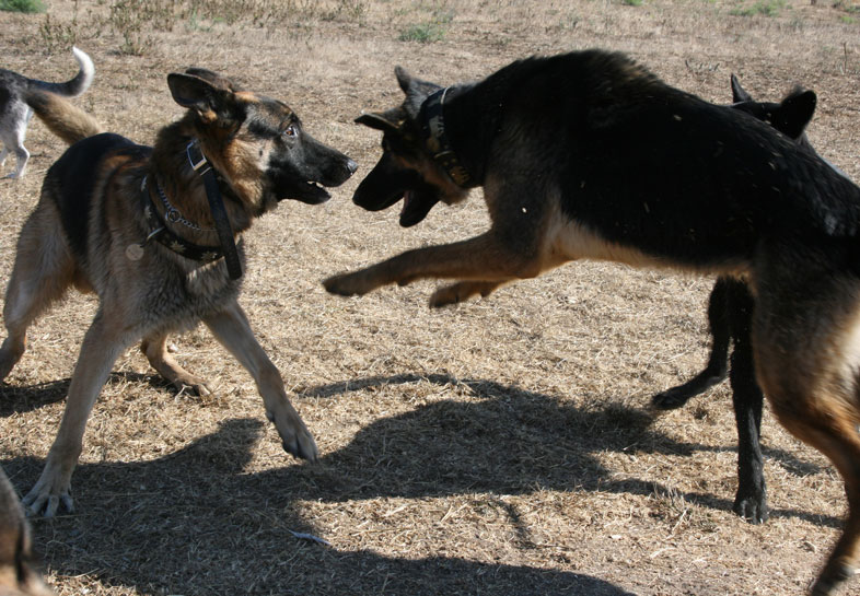 Dog Training East Bay Area